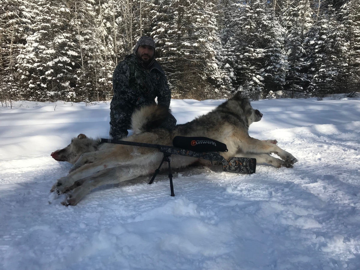 Alberta Canada Wolf Hunting Guides - Winter Timber Wolf ...